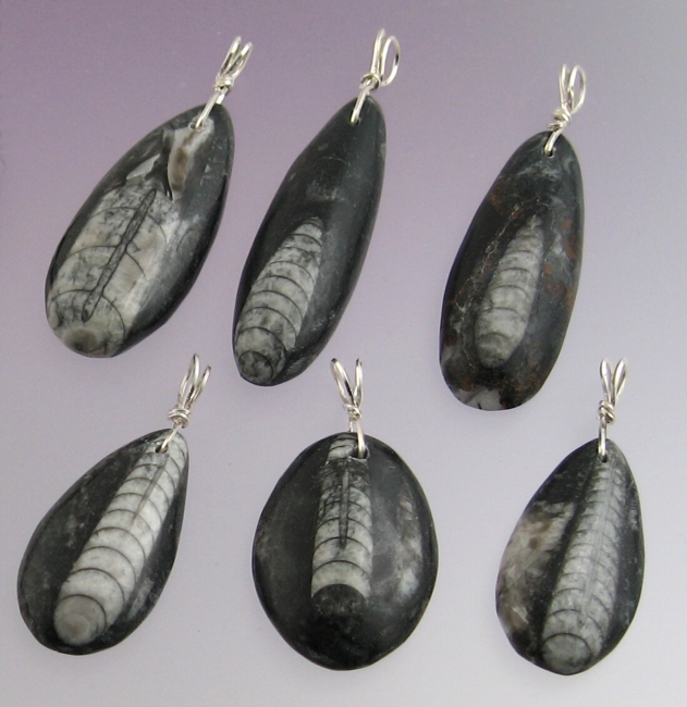 Orthoceras orthoceras pendants mozeypictures Gallery