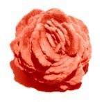 Barytine rose