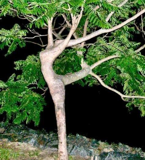 Tree Of Life, Kabbalah Products